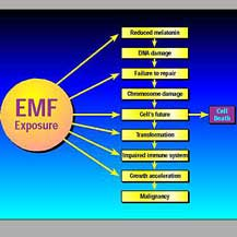 emf-exposure-tachyon.jpg