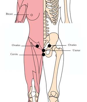 os-13-gynecological-health-tlc-points.jpg