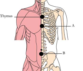 os-22-lymphatic-glandular-cell-points1.jpg