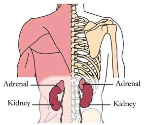 os-25-adrenals-tlc-points.jpg