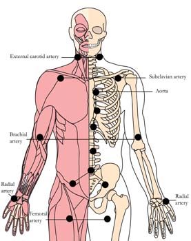 os-9-circulation-enhancing-tlc-points.jpg