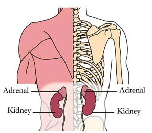 os-adr-adrenal-tlc-points.jpg
