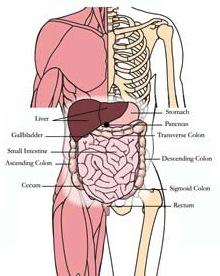 os-liv-liver-tlc-points.jpg