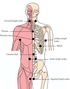os-lym-lymph-tlc-points.jpg
