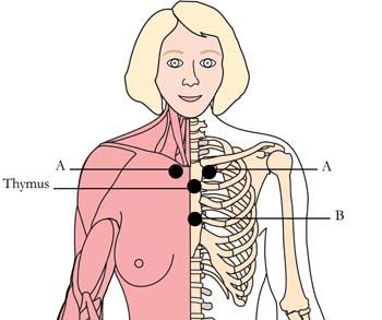 os-ova-menstrual-menopausal-cell-points.jpg