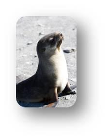wild-seal-tachyon.jpg